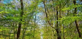 Sentiers de découverte sensorielle des arbres de Bizy