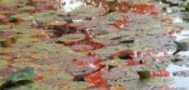 Balade d'automne dans le jardin de Claude Monet à Giverny